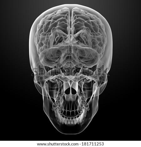 Human brain X ray - bottom view - stock photo