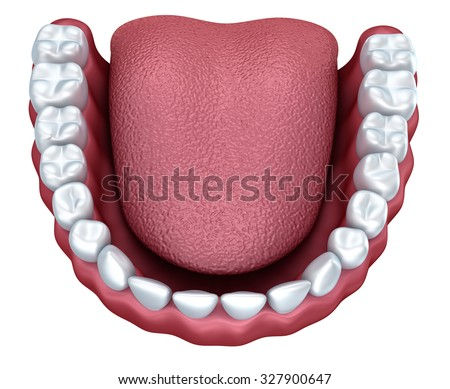 Human denture 3D image, isolated on white - stock photo