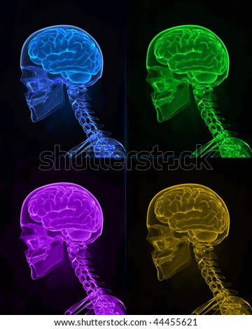 Human diversity concept - X-ray human head with brains - stock photo