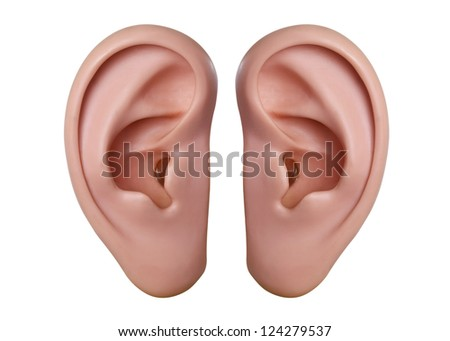 Human ears model - isolated on white background - stock photo