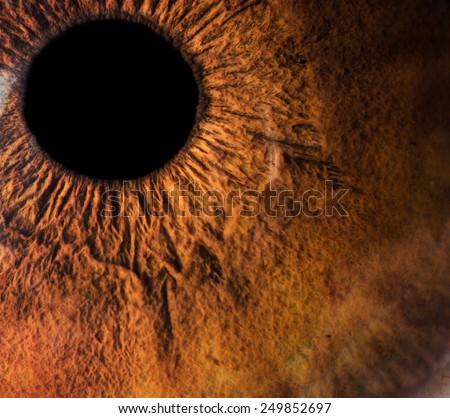 Human eye macro closeup - stock photo
