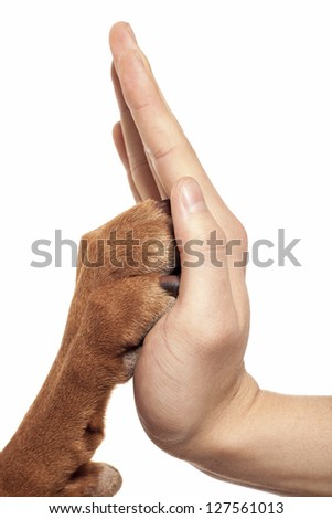 human hand and dog paw touching each-other in high five - stock photo