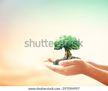 Human hand hold big plant. Soil Blur Abstract Beauty Sea Ocean Forest Desert Ecology CSR Life Arbor Spring Kidney Idea Assured Food Trust Healthy Wealth Enrich Wisdom Save Tree System Love Investor  - stock photo