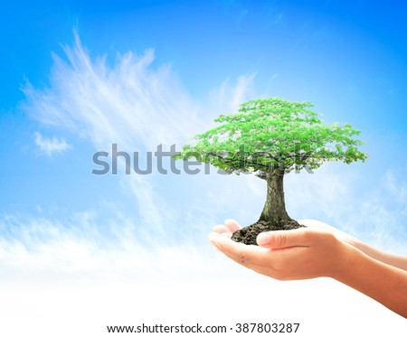 Human hand holding big tree over blue sky background. World Environment Day, Fund, LIT, Ecology, Food, Preserve, Sustainable Development, Wisdom, CSR, ROI, Trust, Spring Time, Love concept. - stock photo