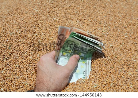 Human hand holding Euro banknote with wheat in background - stock photo