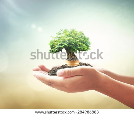 Human hand holding golden coins with big tree. Seedling, Money coin, Ecology, Education, Health Care, Insurance Agent, Investment, World Environment day, Seed, Saving Tree, Business, LIT concept - stock photo