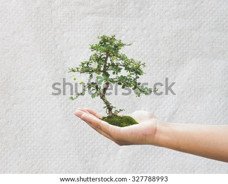 Human hand holding medium green plant with soil on blurred abstract. Ecology, World Environment, Tree of Knowledge concept.,Concept save paper - stock photo