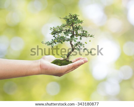 Human hand holding medium green plant with soil on blurred nature abstract. Ecology, World Environment, Tree of Knowledge concept. - stock photo