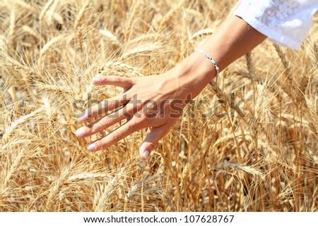 Human hand over ripe wheat - stock photo