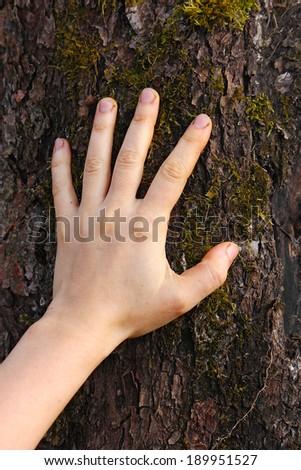human hand touches the tree bark, apple-tree, Russia - stock photo