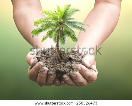 Human hands holding coconut palm tree over blurred nature background. Ecology concept. - stock photo