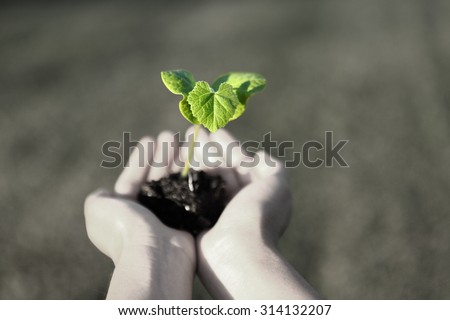 Human hands holding green small plant new life concept. copy-space - stock photo
