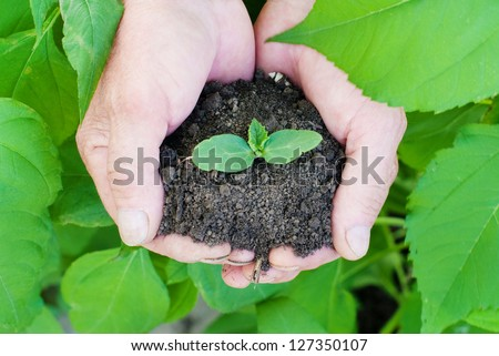 Human hands holding green small plant. New life concept, ecological concept - stock photo