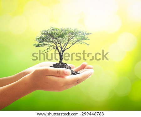 Human hands holding medium plant or big tree with soil on blurred abstract beautiful sunset background. Ecology concept. World Environment Day concept. - stock photo