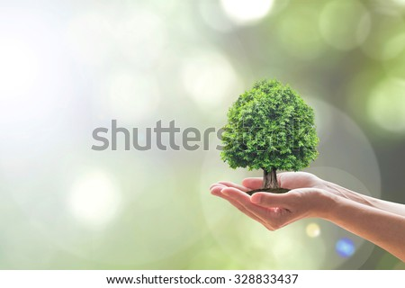 Human hands holding perfect growing tree plant on blur natural background greenery: Reforestation, sustainable eco forest, saving environment, harmony bio living life ecosystem conservation campaign - stock photo