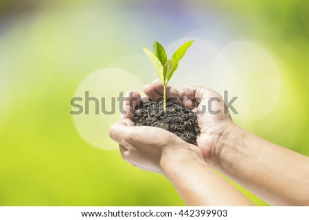Human hands holding small plant over blurred nature background. Ecology concept. - stock photo