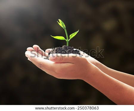 Human hands holding small tree on blur beautiful forest background. Ecologic  World Environment Day CSR Earth Eco Friendly Trust Begin Nature Food Idea Start Holy Bible Earth Grow Dark Dirt concept. - stock photo