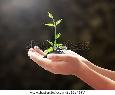 Human hands holding young plant or medium tree with soil on blurred abstract beautiful forest or soil over colorful sunset background. Ecology concept. World Environment Day concept. - stock photo