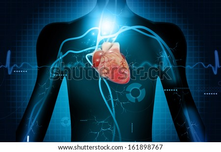 Human heart anatomy on abstract digital background  - stock photo