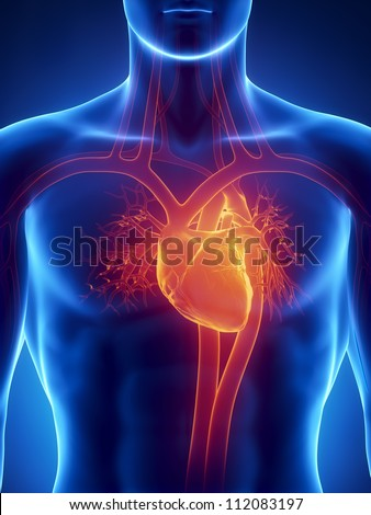 Human heart anatomy with arteries and aorta     **** Also as footage available in my portfolio - stock photo