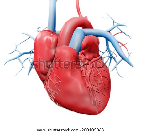 Human heart - cardiology health care illustration - stock photo
