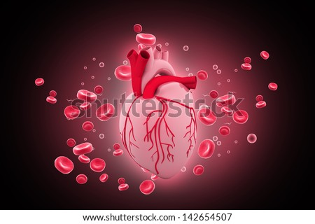 Human heart circulation cardiovascular system with blood cells - stock photo