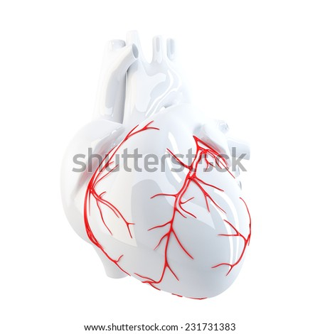 Human Heart. Isolated. Contains clipping path - stock photo