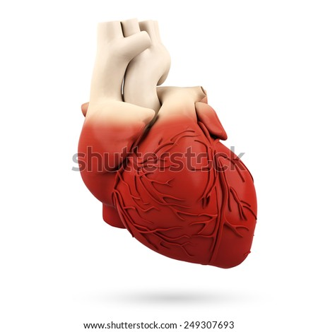Human heart isolated on a white background - stock photo