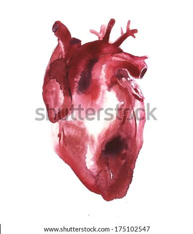 human heart watercolor illustration - stock photo