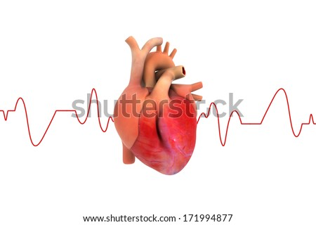 Human Heart with ECG graph - stock photo