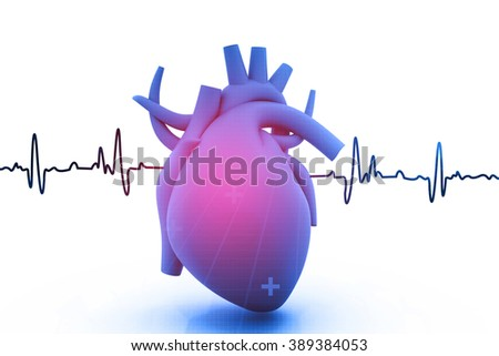 Human heart with ecg graph on  white background - stock photo