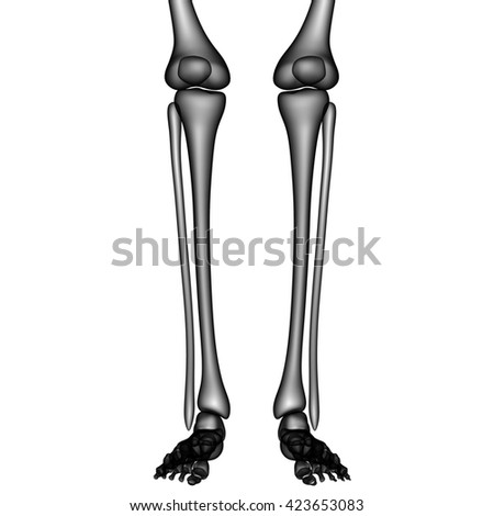 Human Legs with Knee Joints. 3D - stock photo