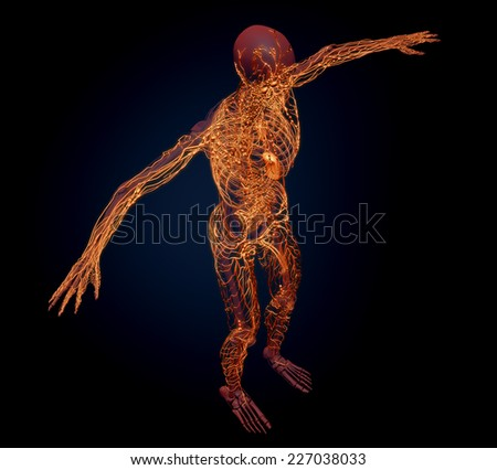 Human lymphatic system - medical illustration - stock photo