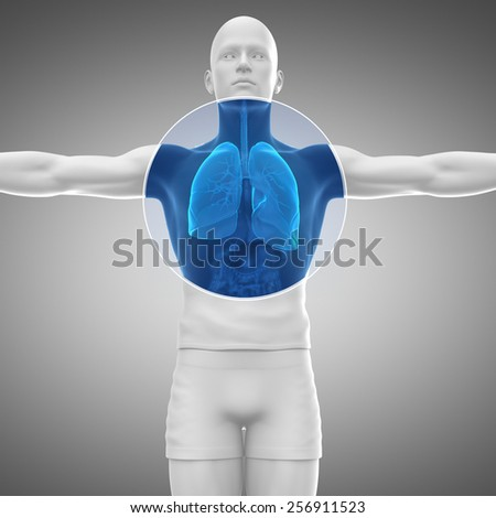 Human man anatomy with x-ray lungs and respiratory system in blue - stock photo