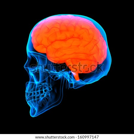 Human red brain X ray - side view - stock photo