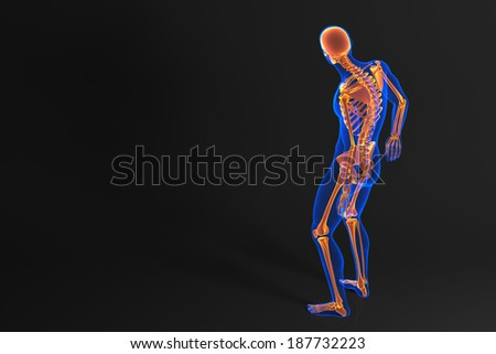 Human skeleton. Rear view. Contains clipping path - stock photo