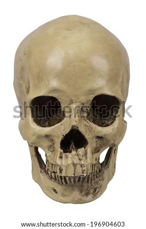 Human skull (cranium) isolated on white background - stock photo