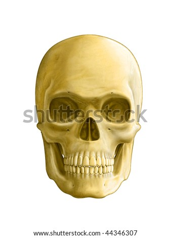 Human skull, front view. Digital illustration, clipping path included. - stock photo