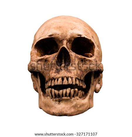 Human skull isolate on white background - stock photo