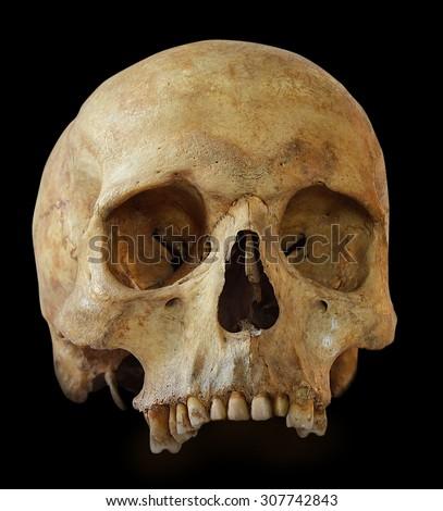 Human skull  isolated on black background. - stock photo