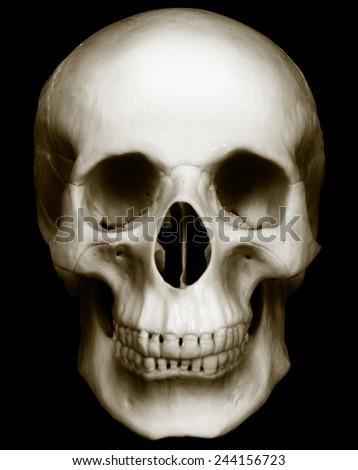 Human skull isolated on dark background - stock photo