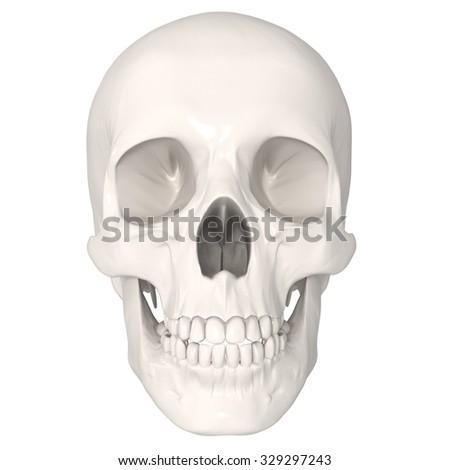 human skull isolated on white background - stock photo