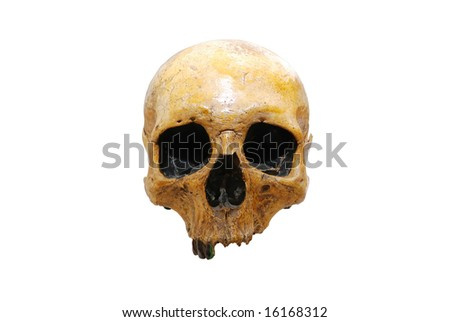 Human skull isolated on white - clipping path included - stock photo