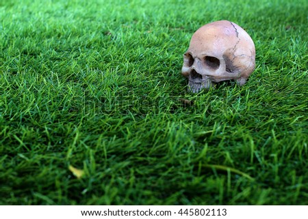 human skull on green grass background - still life - stock photo