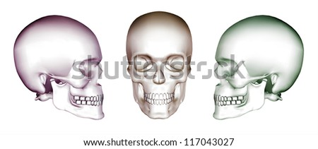 Human skulls in 3d x-ray - stock photo