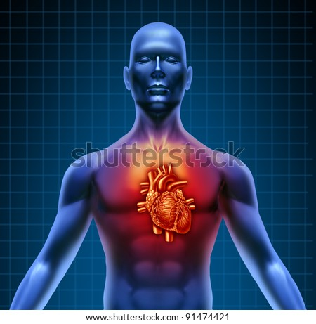 Human torso with red high lighted heart anatomy from a healthy body on a blue background as a medical health care symbol of an inner cardiovascular organ. - stock photo