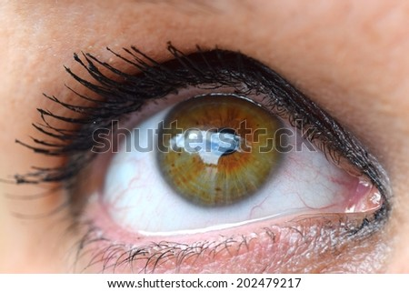 Human womens brown eye close up image - stock photo
