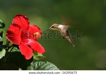 Humming Bird Feeding Landscape - stock photo