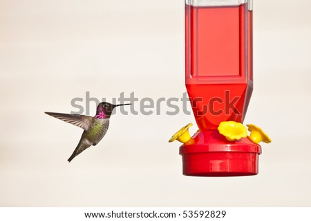 Hummingbird and feeder.  Anna's Hummingbird against light background - stock photo