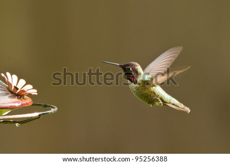 Hummingbird and feeder.  Side view of hummingbird hovering next to a feeder. - stock photo